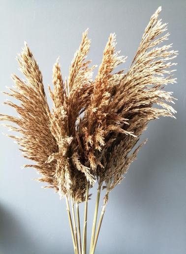 Kuru Çiçek Deposu Dökülmeyen Büyük Natural Pampas Demeti Kuru Çiçek 100 cm 7 Adet Bej